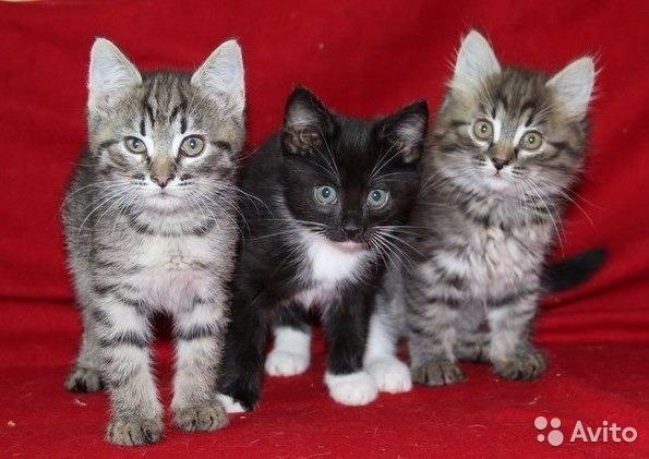 Здесь все о котах, кошках и котятах)))